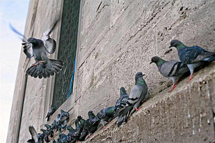Pigeon Control Net in Gurgaon