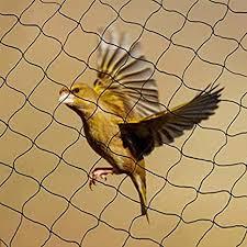 Anti Bird Net Services in Noida